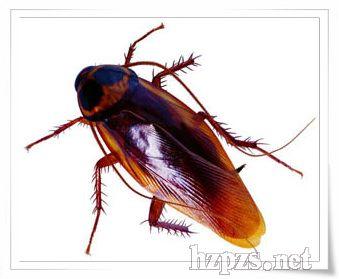 细思恐极 蟑螂原是高档化妆品原料