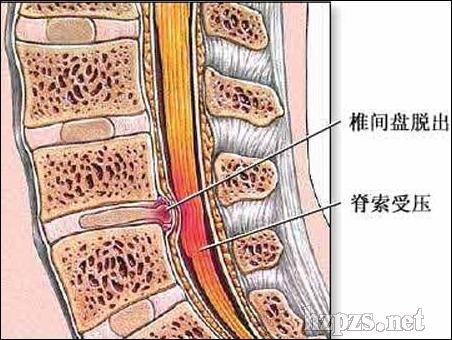 脖子前边正中的骨头结构图